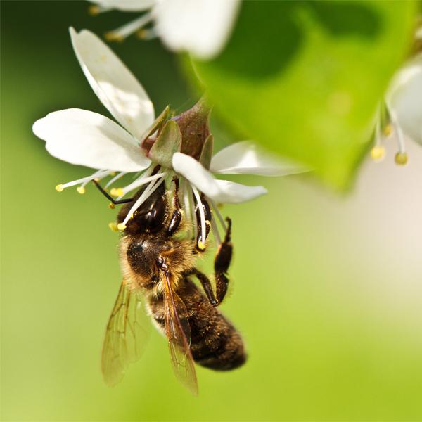 #16 Du miel et des abeilles